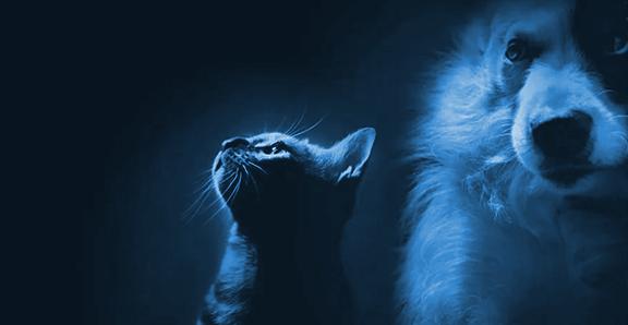 krematsiya-home-blue